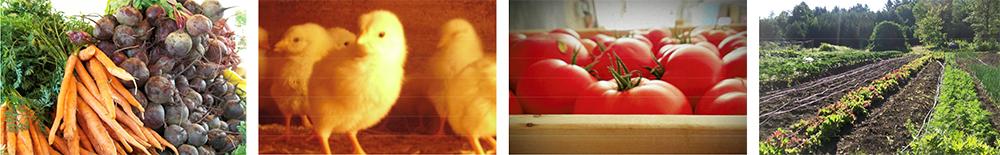 Groundworks Farm - Year Round Food