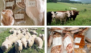 Meat Shares - Groundworks Farm