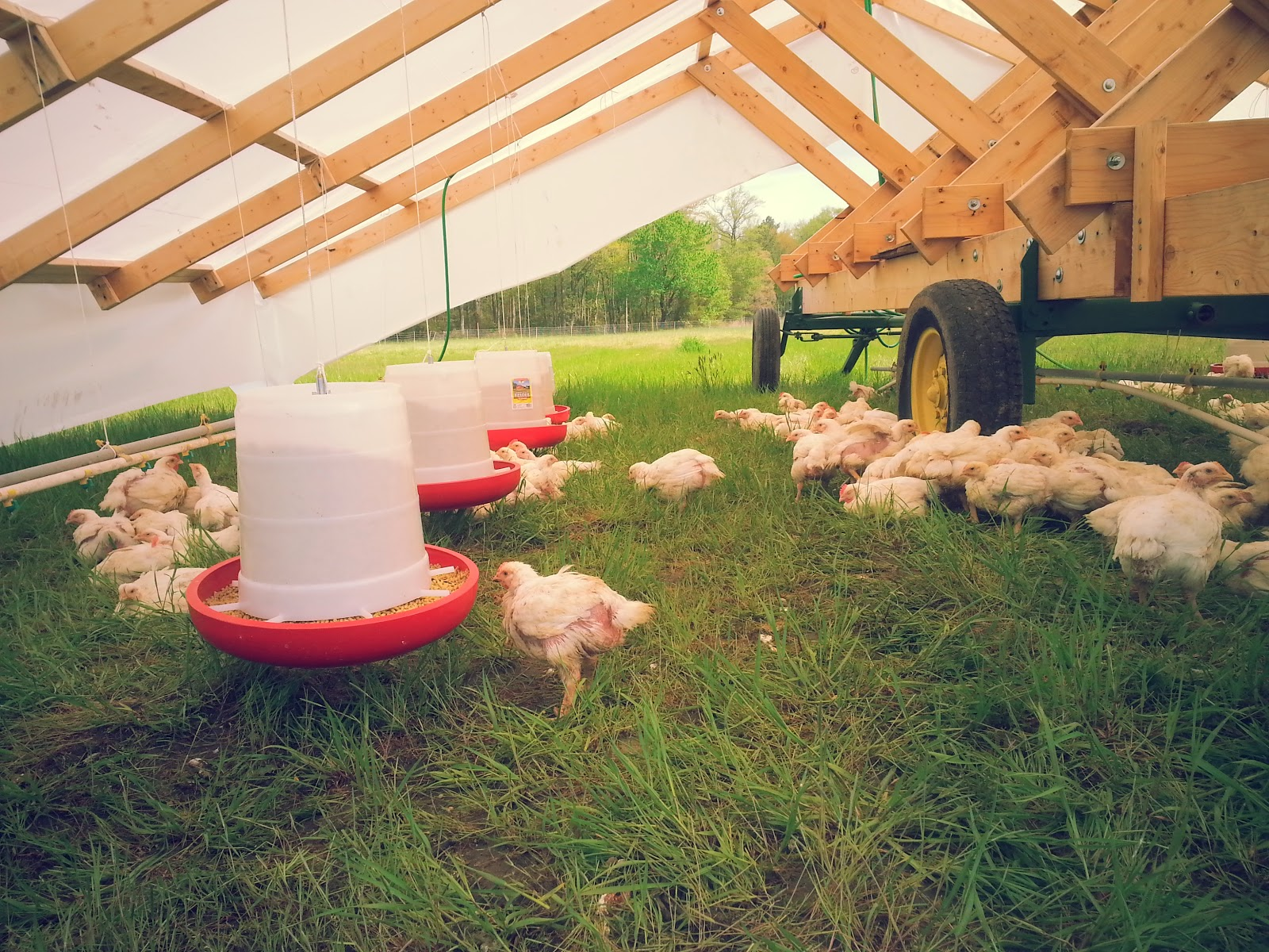 Summer-Fall Pastured Chicken Share