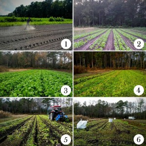 root vegetable production with numbers